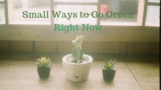 Small Ways to Go Green Right Now